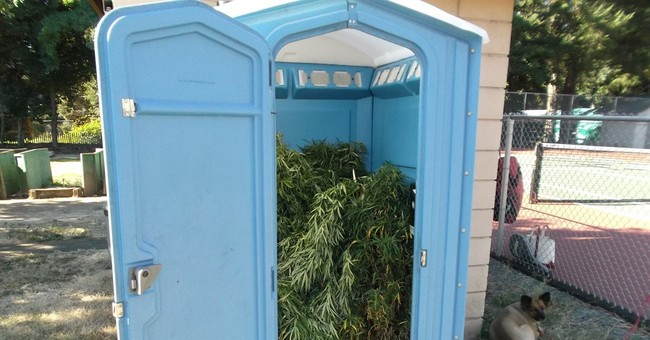 Oregon man finds portable toilet filled with pot