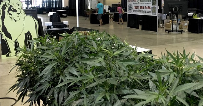 First-ever marijuana fair opens in Oregon