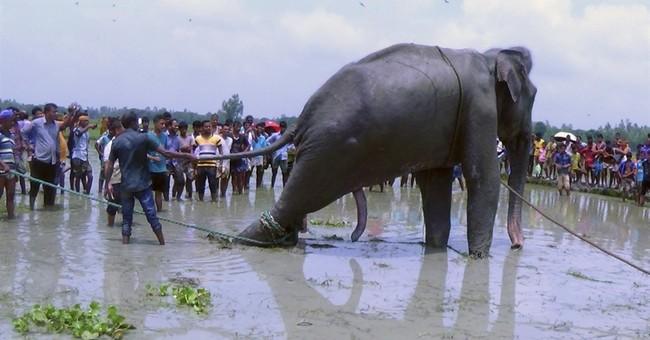 Bangladesh tries to move stranded elephant to safari park