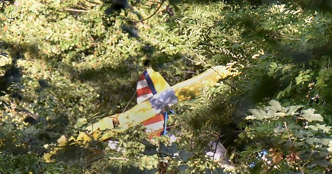 Ultralight pilot in Germany spends night in tree after crash