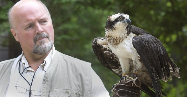 Scientists unravel mystery of osprey migration
