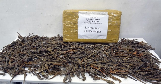 2,000 dead seahorses smuggled in packages to France