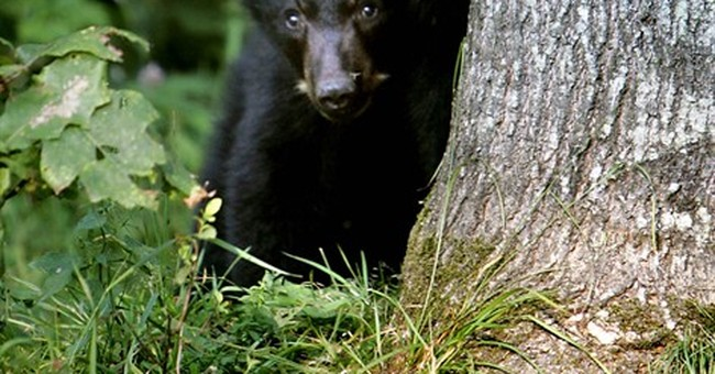 New England drought means bolder bears, stressed fish