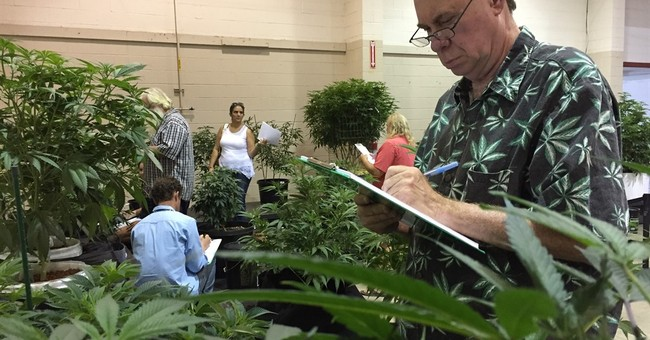 Oregon buzz: Pot plants at state fair in a 1st for the US