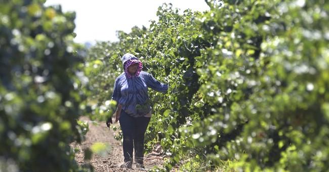 California lawmakers revive farmworker overtime bill