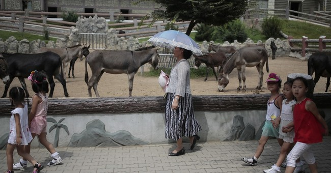 Lions, tigers and poodles? Dogs a big draw at Pyongyang zoo