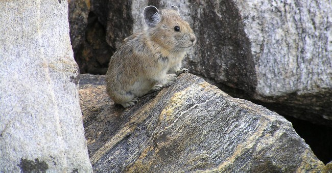 Correction: Climate Change-American Pika story