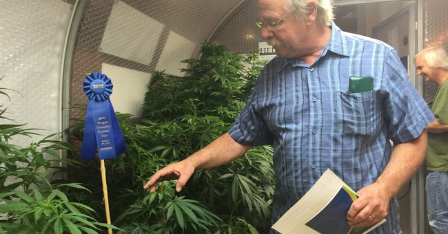 The Latest: Pot plants on display at Oregon State Fair