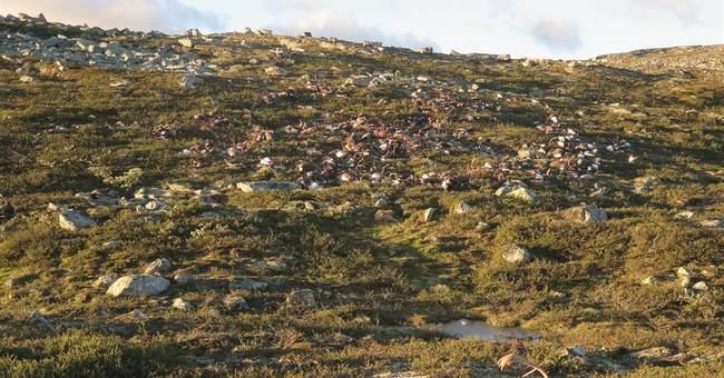 Lightning strike kills more than 300 reindeer in Norway