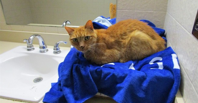 Welcome center becomes rescue center for cross-country cat