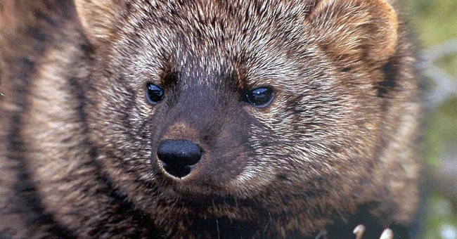 US to decide on protections for 9 species