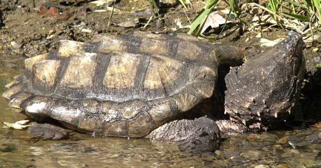 Settlement forces US to decide whether 9 species endangered