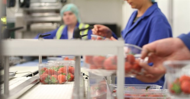 Slim pickings: Without EU laborers, who'll harvest UK fruit?