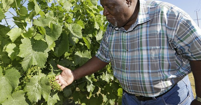 Growing grapes, saving lives in Cleveland's tough east side