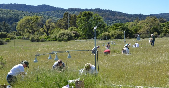 Future climate change field test doesn't make Earth greener
