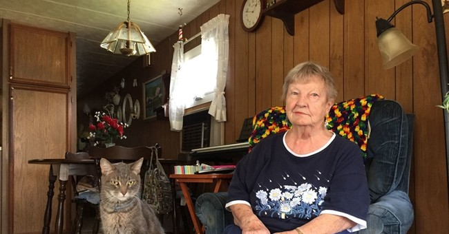 Woman who was stranded in woods is reunited with escaped cat