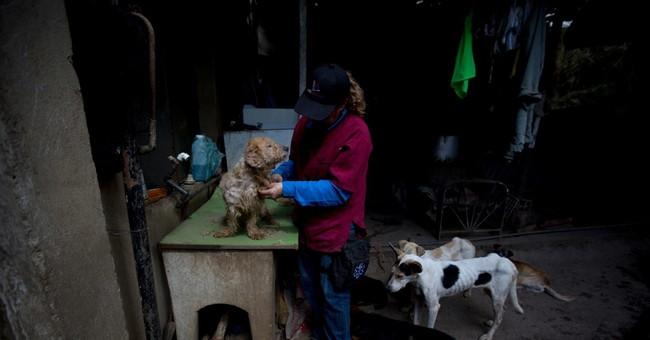 Venezuela pets go hungry as economic crisis deepens