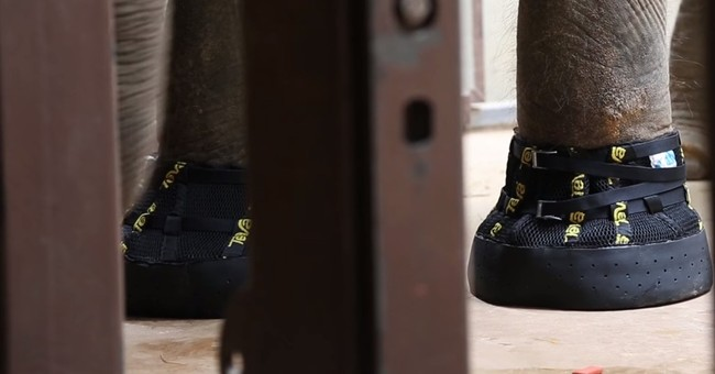 These boots are made for walking: DC elephant gets footwear