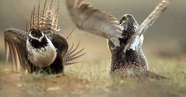Ag secretary says private investment needed to help grouse