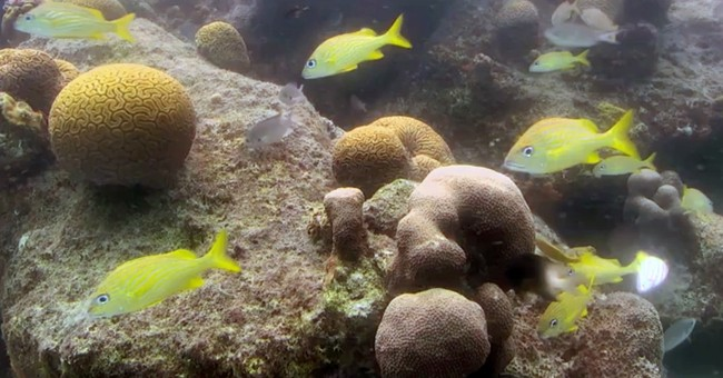 A famous name and 3D printing combine to aid Caribbean coral