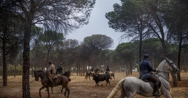 New law stops gore at Spanish bull-spearing festival