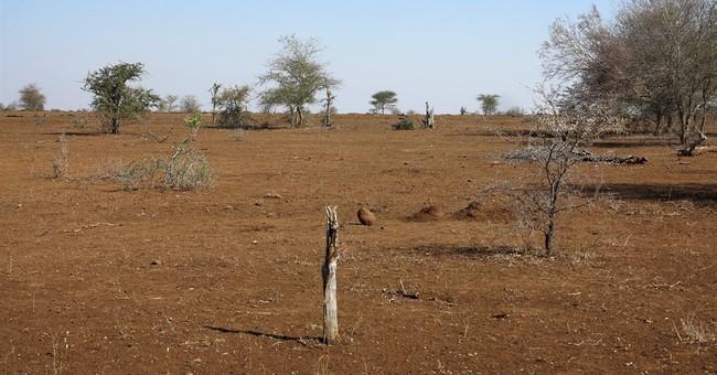 South African park kills 350 hippos, buffalos amid drought