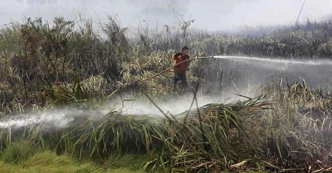Study estimates 100,000 deaths from Indonesia haze