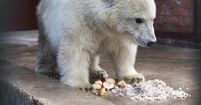 Russian military flies polar bear from far east to Moscow