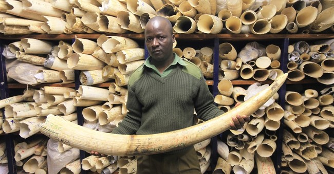 Africa divided over ivory trade, as some states want to sell