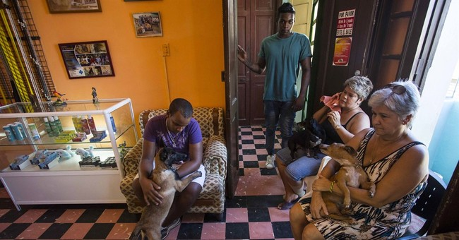 New class of pampered purebred dogs emerges in Cuba