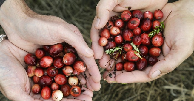 Cranberries at 200: Market changes, drought create a crisis