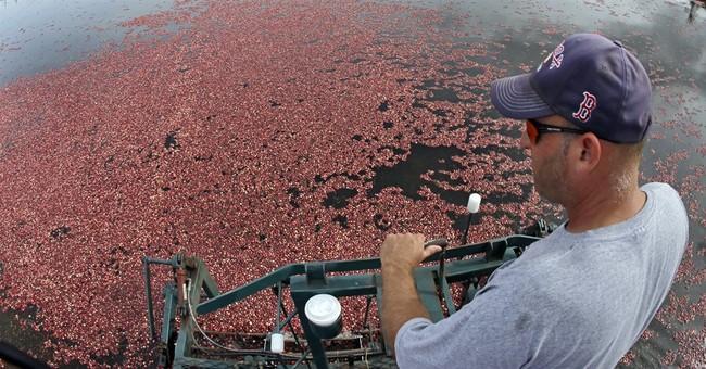 Cranberries at 200: Market changes, drought create a crisis