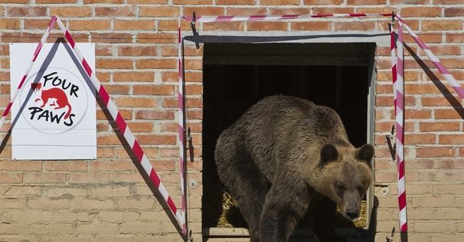 3 bears revisited: they've got a new home in Kosovo
