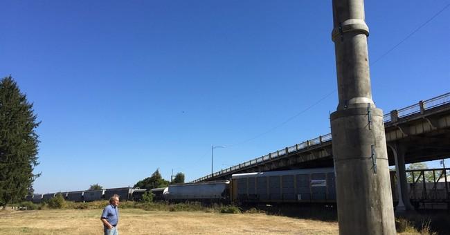 Migratory bird struggles for shelter as chimneys torn down