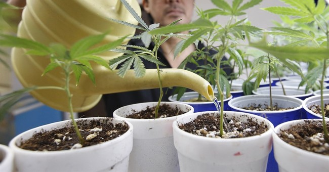 9 states to vote soon on expanding legal access to marijuana
