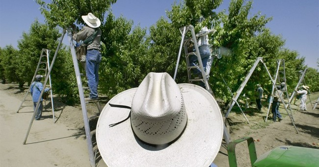 APNewsBreak: California to ban some pesticides near schools