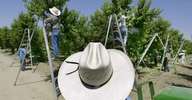 APNewsBreak: California to ban some pesticides near schools