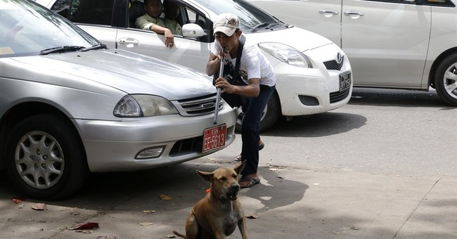 Myanmar nabs, neuters and vaccinates strays to fight rabies