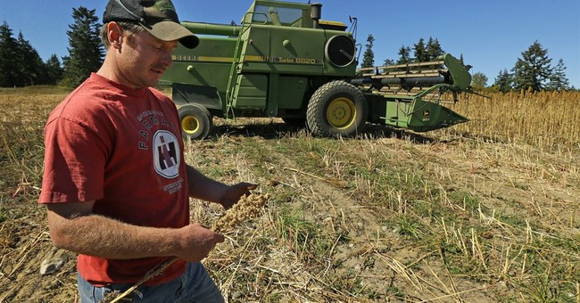 AP PHOTOS: South American super grain crops up on West Coast