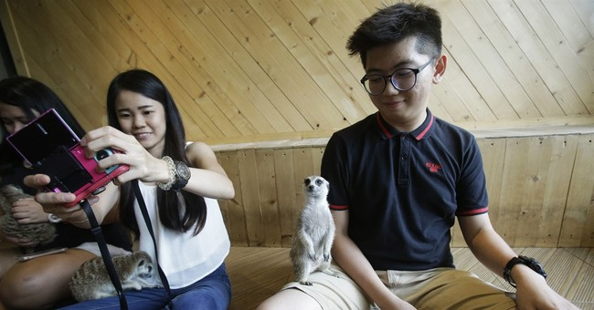 A bit wild: Asian animal cafes go from mere cats to meerkats