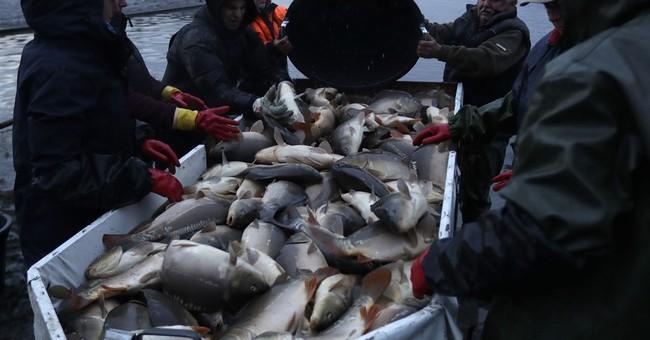 AP PHOTOS: Traditional carp fishing in Franconian village