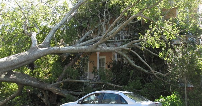 Savannah's signature tree canopy gets bushwhacked by Matthew