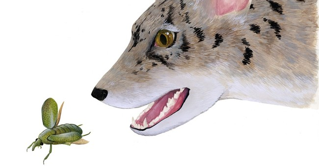 'Beardog' discovery offers clues to how canines evolved