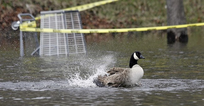 Boston looks to fix goose poop problem in parks, playgrounds