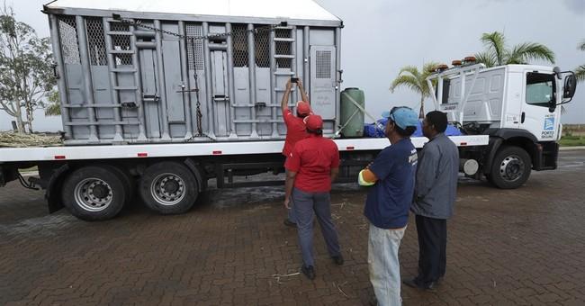 Brazil opens Latin America's 1st elephant refuge