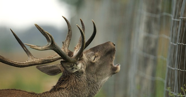 Hungary's anti-migrant fence disrupts wildlife habitats
