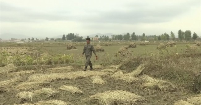 Good weather, new incentives seen boosting N. Korea harvest
