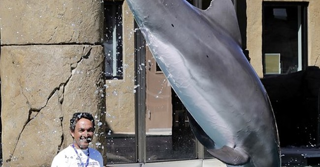 As marine parks scale back, dolphin exhibit opens in Arizona