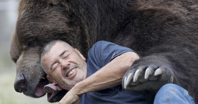 Bear with him: Man grabs attention for hugging big bears