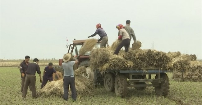Good weather, new incentives seen boosting N. Korea harvest